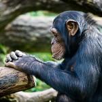 """""""Monkey Thinking"""""""