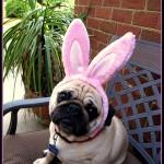 EasterBunnyDog